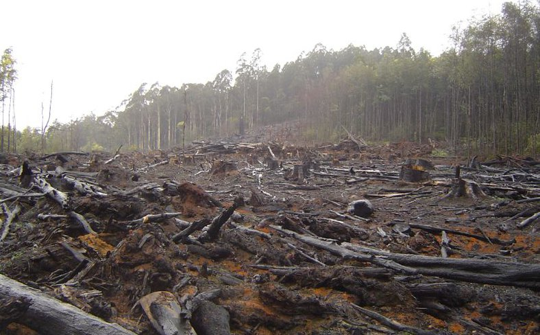 Deforestaton.jpg