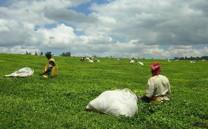 Teapickers-near-kericho.JPG